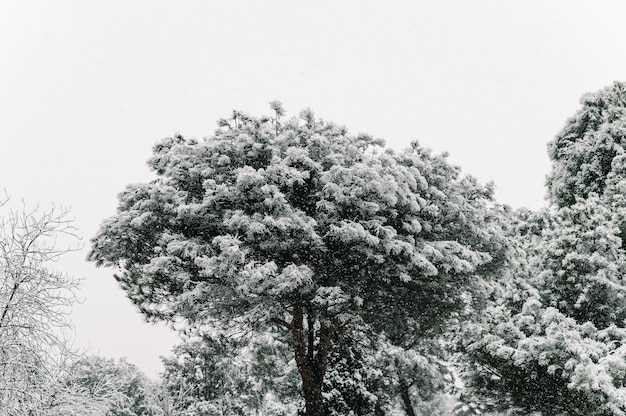 겨울에 도시에서 주거 아파트의 배경에 눈으로 덮여 나뭇 가지와 눈 덮인 나무 꼭대기