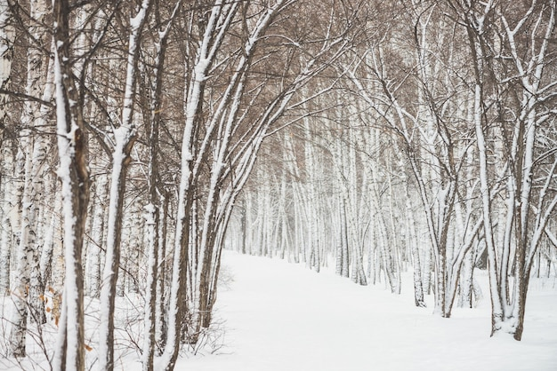 Snowy tunnel among trees in parkland