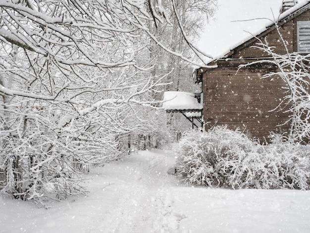Snowy white scene in village. winter trees with hoarfrost