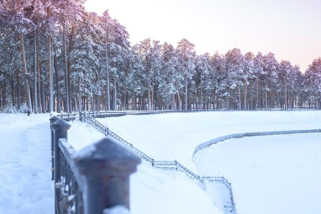 Снежный зимний лес у реки