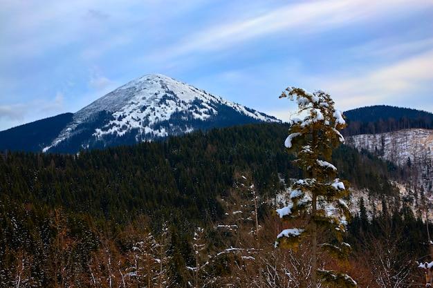 山の中の雪に覆われた冬の森、松、クリスマスツリー、木々の間の雪の中の道