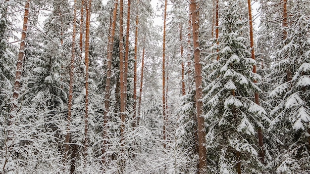 Снежный зимний лес заснеженные ветки деревьев и кустов