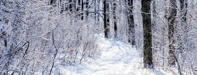 Снежный зимний лес с дорогой между деревьями и кустами в солнечный день