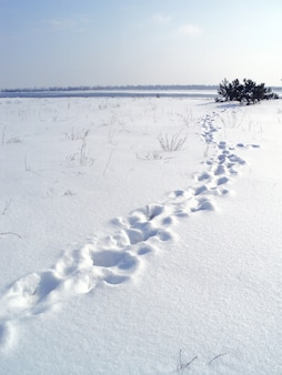 Snowy winter landscape on the banks of a frozen river.