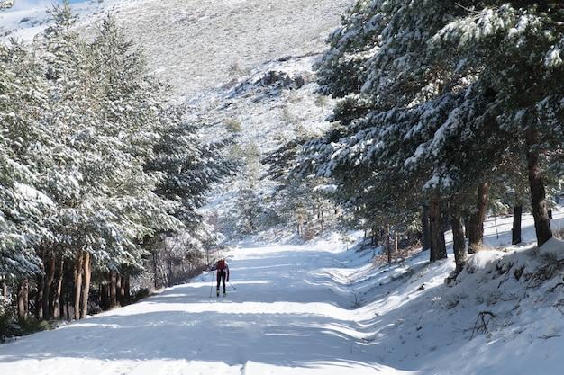 Снежный зимний пейзаж на горе с заснеженными соснами вокруг. подъем лыжника.