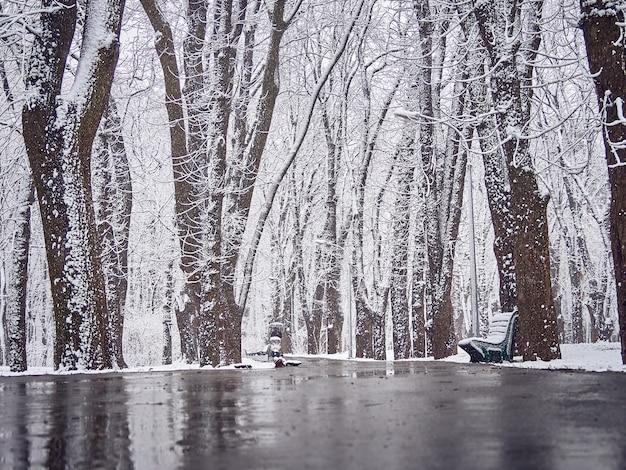 경로에 진창이있는 눈 덮인 겨울 공원