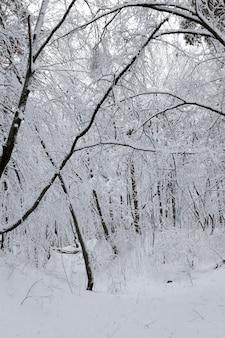 雪の降る冬