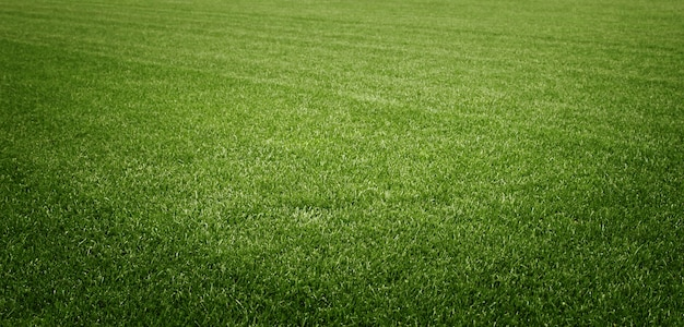Soccer field with green grass. sport lawn background