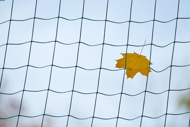 Сетка футбольных ворот с осенним листом