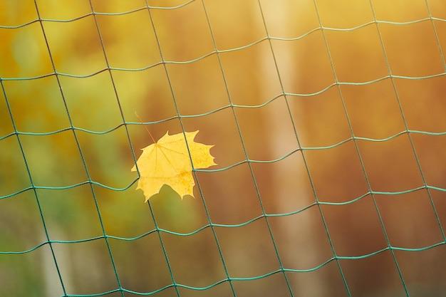 가을 휴가 그물 축구 목표입니다. 스포츠 시즌 개념의 끝.