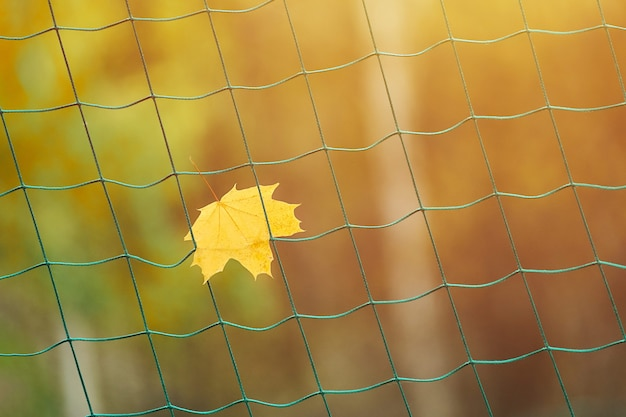 Soccer goal net with autumn leave. end of sports season concept.