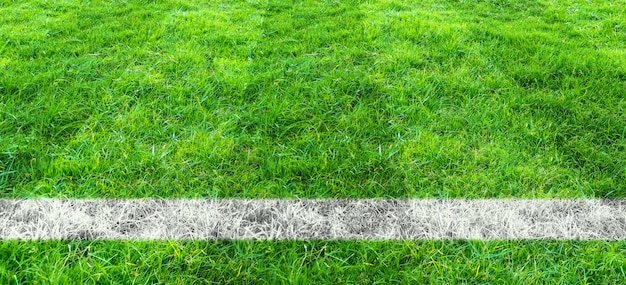 Soccer line in green grass of soccer field. green lawn field pattern for sport background.