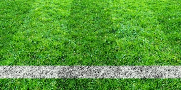 サッカー場の緑の芝生でサッカーライン。緑の芝生フィールドの背景。