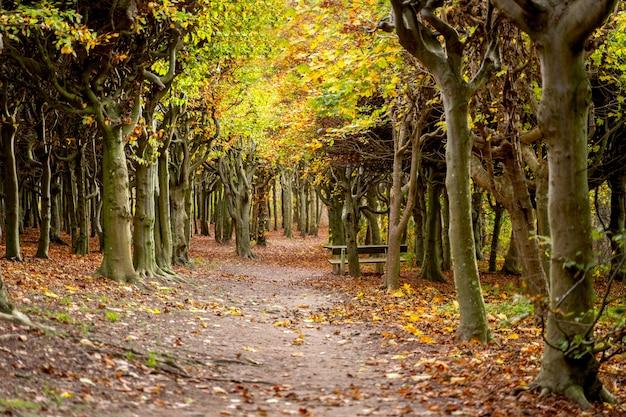 Sofiero garden and forest in helsingborg, skane. autumn in sweden