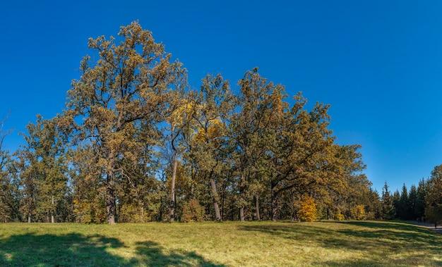 ウマン、ウクライナのsofiyivka公園の木