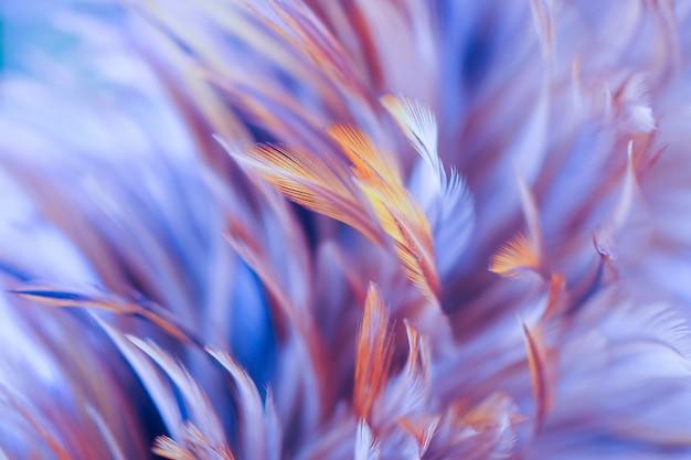 Красочные птицы и куриные перья в стиле soft and blur для фона, абстрактное искусство
