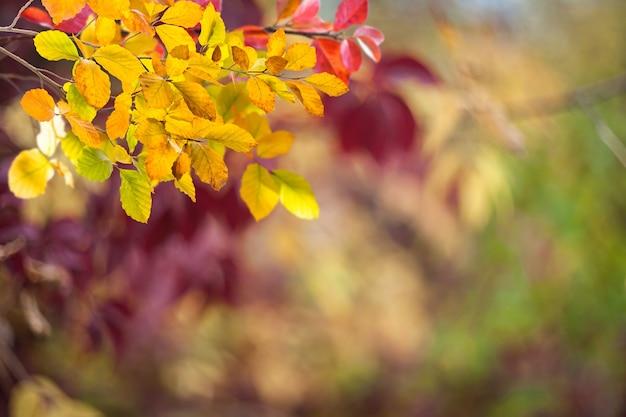 밝은 잎과 부드러운가 배경
