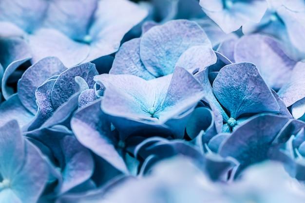 ソフトブルーターコイズアジサイアジサイまたはオルテンシア花びら。浅い被写界深度で柔らかな夢のような感触。