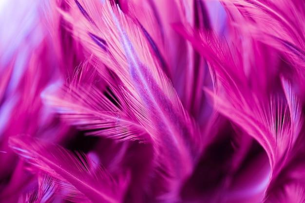 Куриные перья в стиле soft и blur для фона, абстрактное искусство