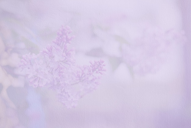 Soft blurred wallpaper or background with lilac flowers. pale purple wall.