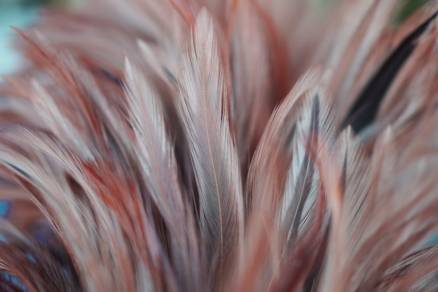 背景の鶏羽テクスチャの柔らかい色