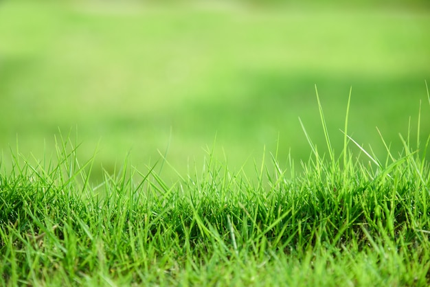 Soft defocused spring background with green grass texture