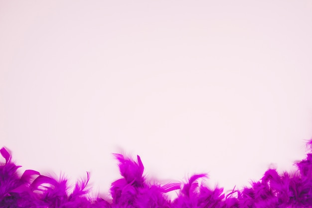Soft feathers on the light pink background with space for writing the text
