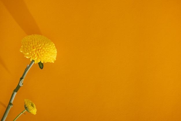 濃い黄色の背景のコピースペースとクローズアップの美的静物に黄色のマリーゴールドの柔らかい花...