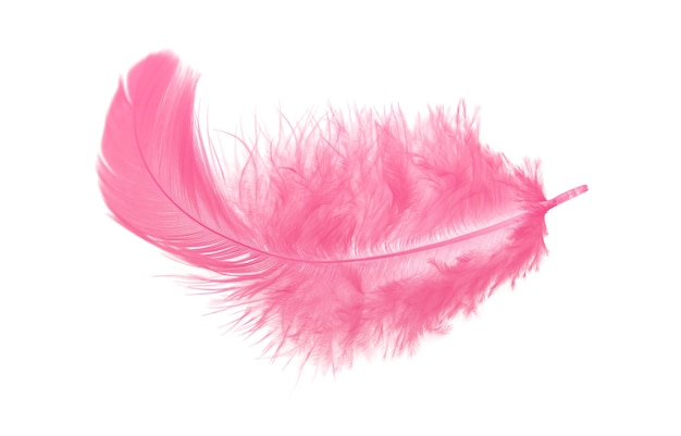 Soft fluffy pink feather isolated on white background
