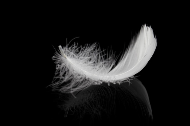 검은 배경에 부드러운 솜털 흰색 깃털