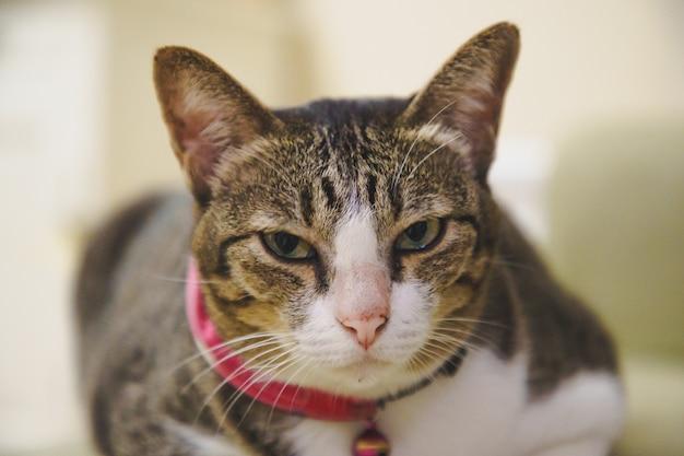 소프트 포커스 갈색 tabby 고양이 새끼 고양이 침대에서 편안 하 게 자 고 unmpressed.