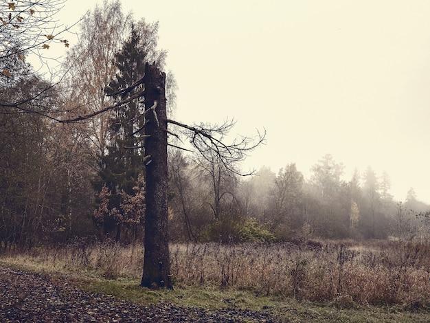 Мягкий фокус. мистический осенний пейзаж со сломанной сосной. винтажная тонировка.