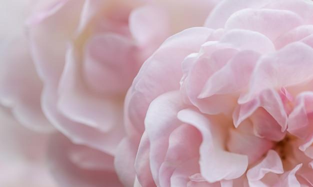 Мягкий фокус абстрактный цветочный фон бледно-розовые лепестки роз макро цветочный фон для праздника бренда