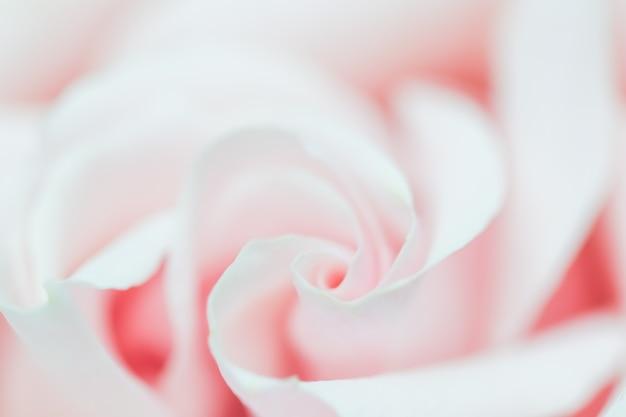 ホリデーブランドのソフトフォーカス抽象的な花の背景ピンクのバラの花マクロ花の背景