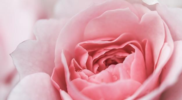 ソフトフォーカス抽象的な花の背景ピンクのバラの花マクロ花の背景の休日のデザイン