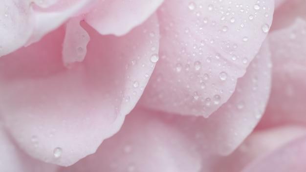 ソフトフォーカス抽象的な花の背景ピンクのバラの花びらと水滴マクロ花