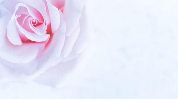 休日のブランドのソフトフォーカス抽象的な花の背景紫のバラの花マクロ花の背景