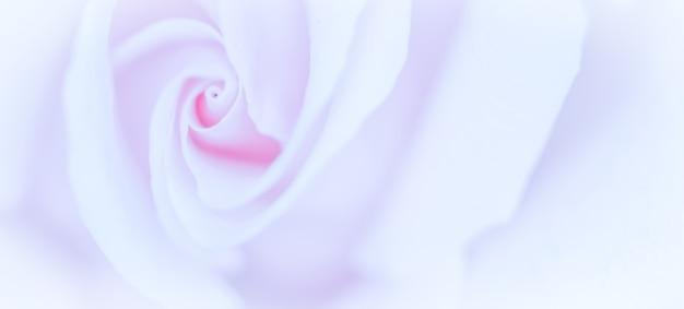 Мягкий фокус абстрактный цветочный фон фиолетовый цветок розы макро цветы фон для праздника бренда