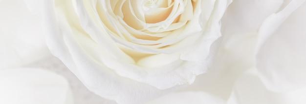 Мягкий фокус абстрактный цветочный фон белая роза цветок макрос цветы фон для праздничного дизайна