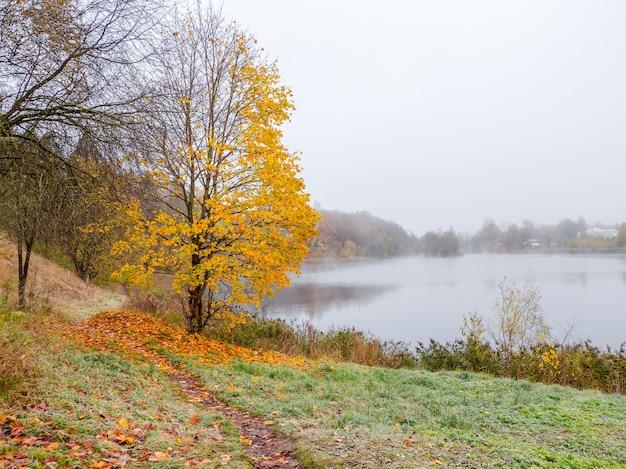 ソフトフォーカス。紅葉。落ち葉のある霧深い秋の公園の小道。霧の湖のそばの黄色いカエデ。