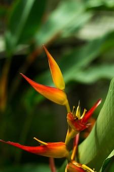 Soft focus of bird of paradise flower