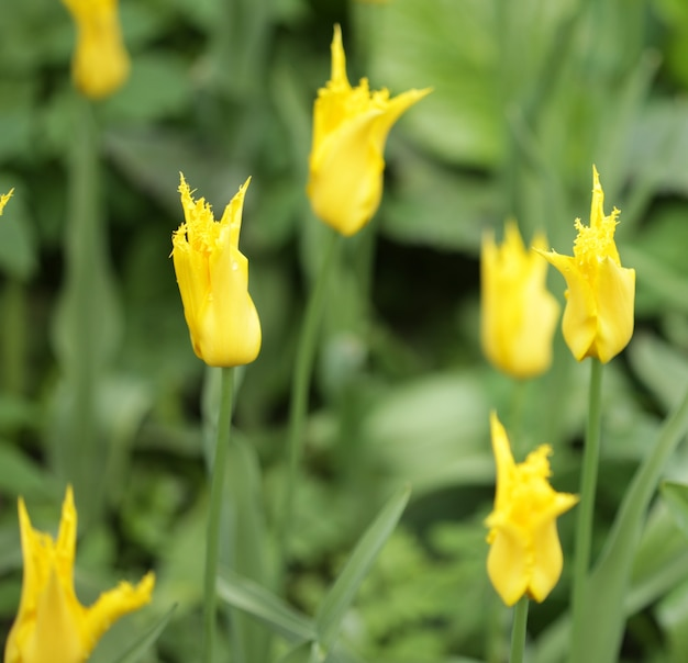 Мягкий фокус крупным планом желтых цветов