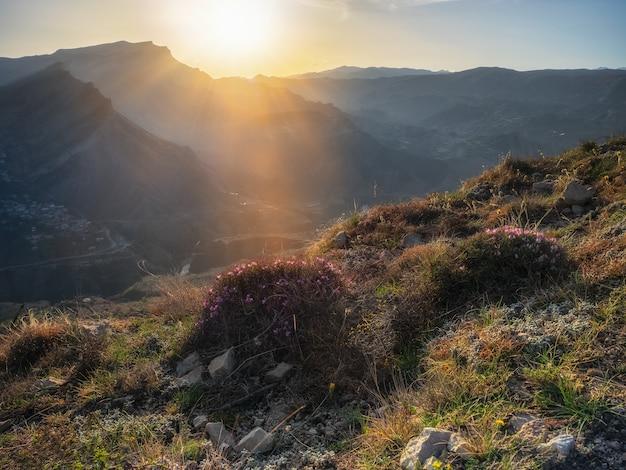 ソフトフォーカス。山での夜。太陽の夕日の光線は、野生の開花茂みで覆われた山の斜面に降り注いでいます。