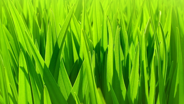 Soft focus of fresh green leaves background