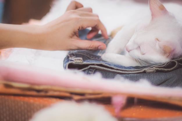 Мягкий фокус девушка играет с кошкой, чтобы успокоить больную кошку. счастливый котенок