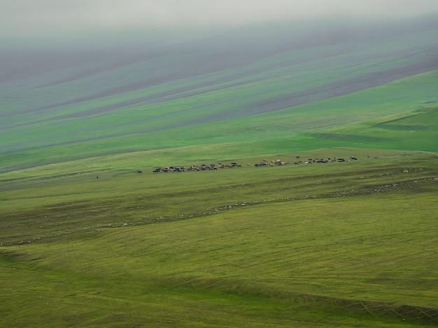 ソフトフォーカス。雨と霧の丘を背景に緑の牧草地で遠くにいる牛のグループ。