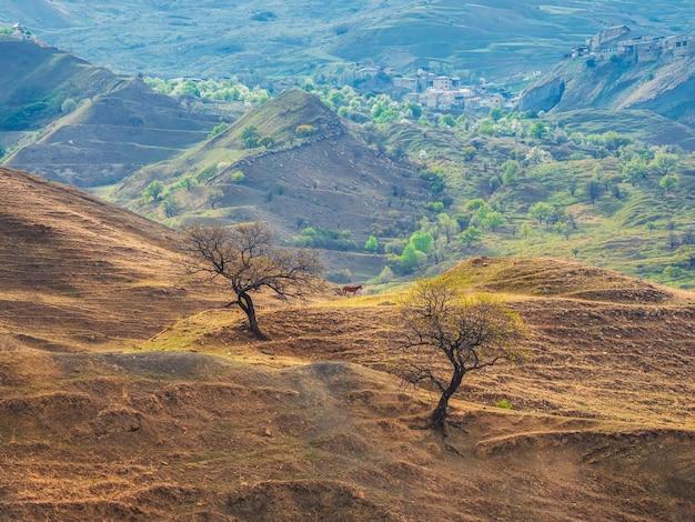 ソフトフォーカス。山腹で馬がかすめる。美しい春の朝の田園風景。素晴らしいテラス山ダゲスタン。ちょう村。