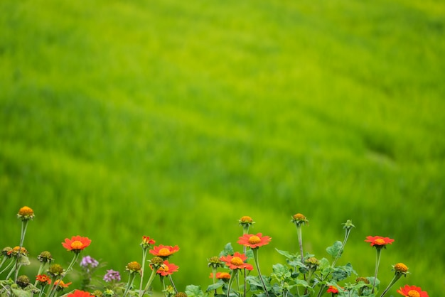 Soft focus image of flowers on green background
