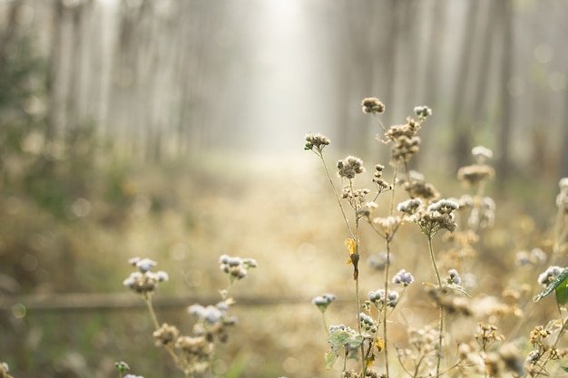 Soft focus of meadow flower with sun rays, floral background.