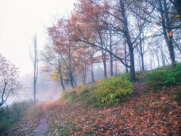 ソフトフォーカス。朝の霧深い秋の森を抜ける登山道。